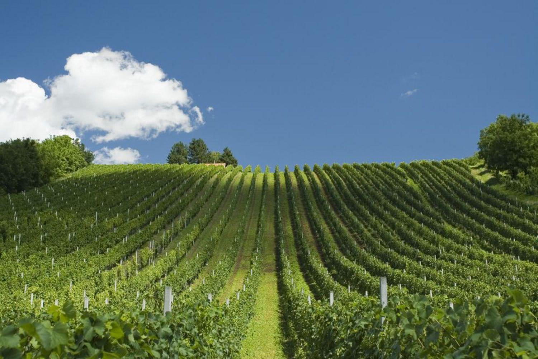 Plesivica wine road