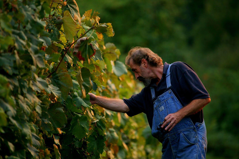 Vineyards Zagreb region, adventure tours Croatia