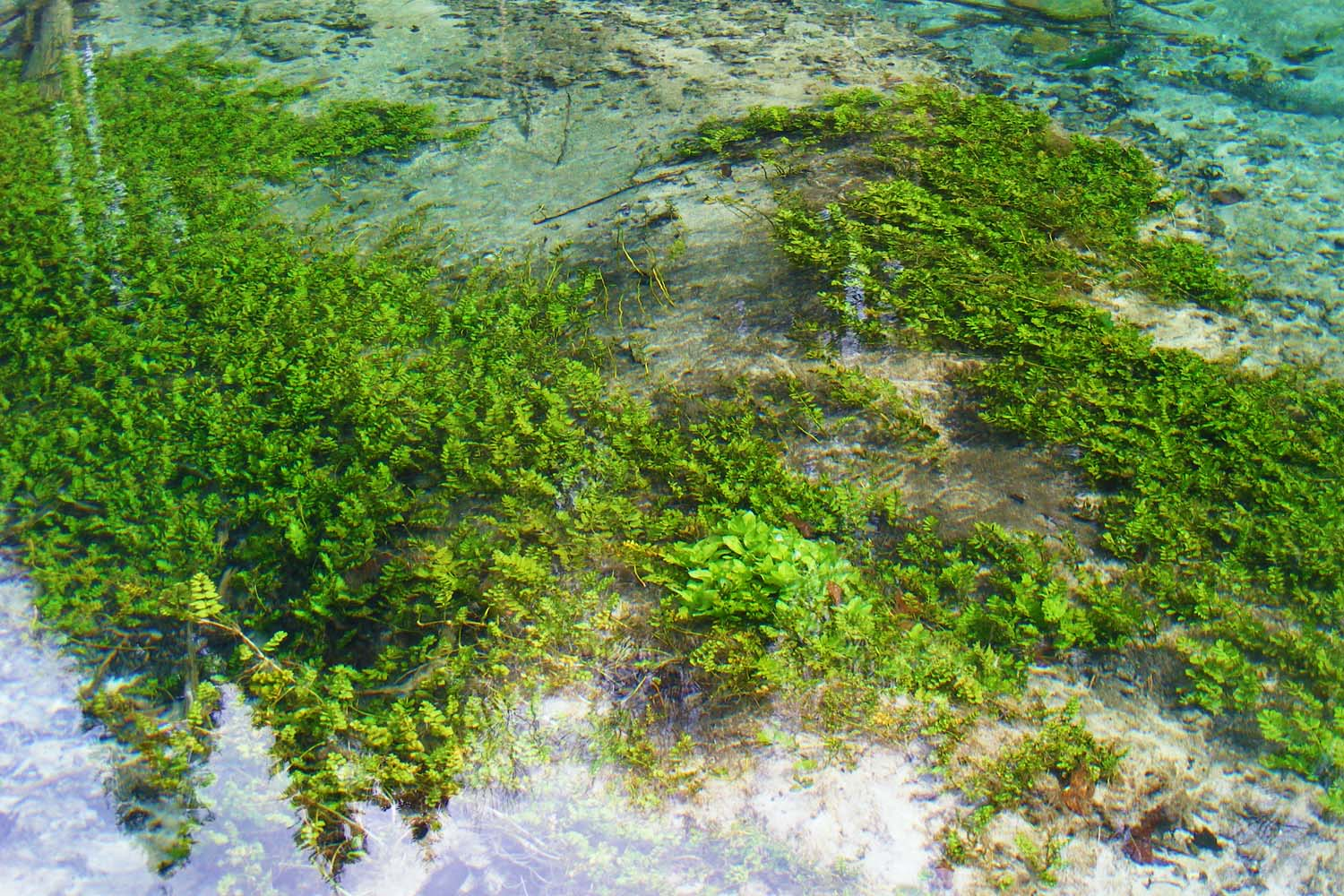 Clear water of Plitvice Lakes