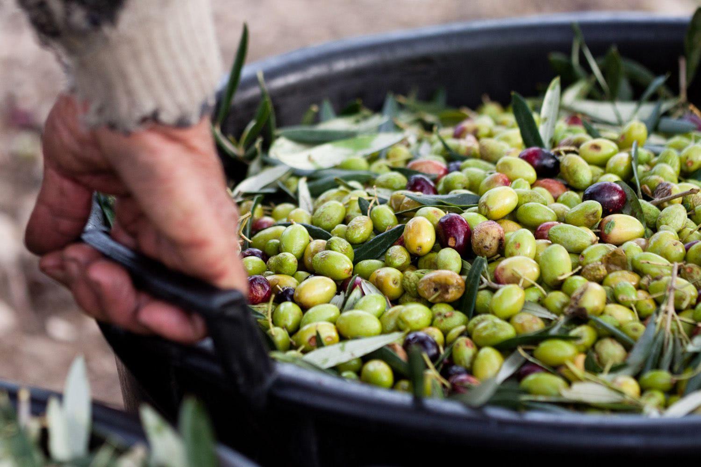 Islands Hiking Hour, Croatia, olives